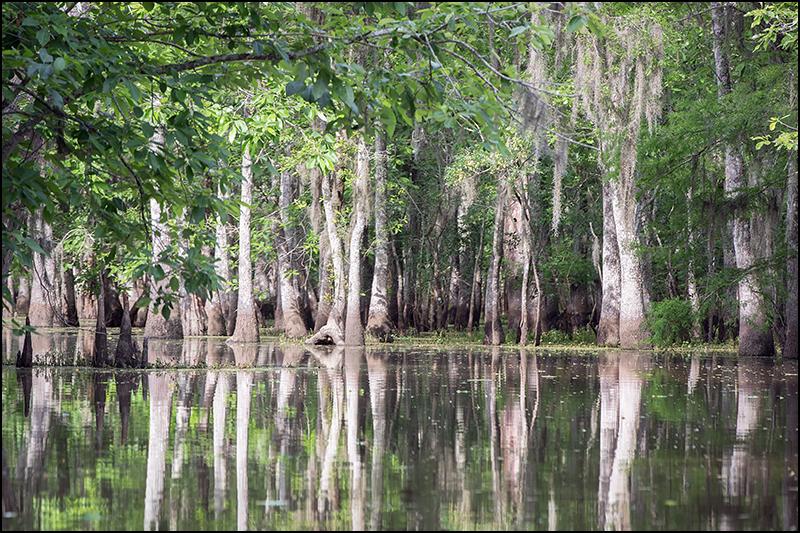 Where Is Honey Island Swamp