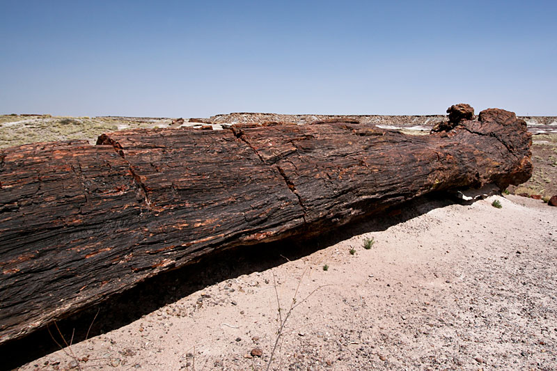 I Am Groot Petrified Forest Natio...